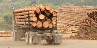 Verso Closure Affecting Timber Prices Across Wisconsin