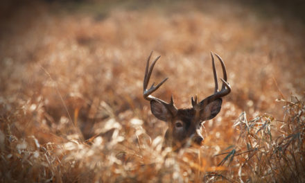 Hunters Reminded to Test Deer For CWD Before Consuming Venison